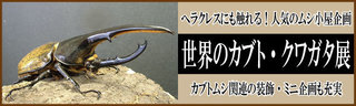 kabukuwa-1.jpg